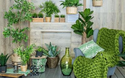 12 plantes dépolluantes pour purifier l'air de chez soi!