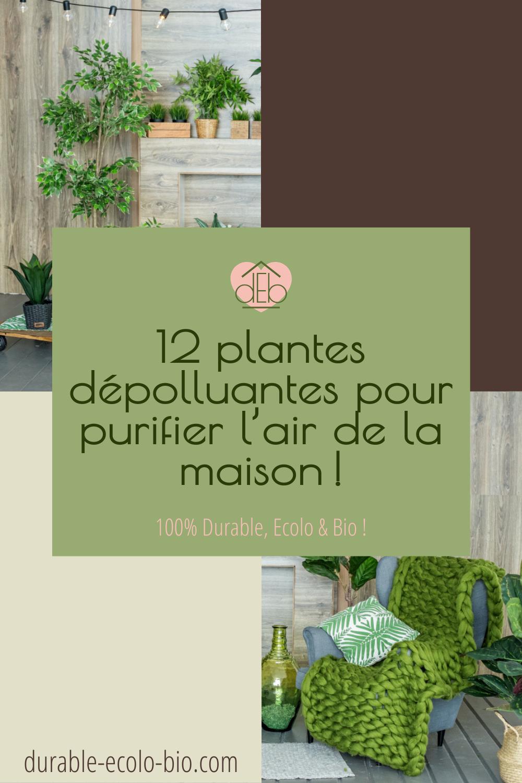 Découvre tout ce qu'il y a à savoir sur ces végétaux, et notre sélection de 12 plantes dépolluantes pour purifier l'air de chez soi !