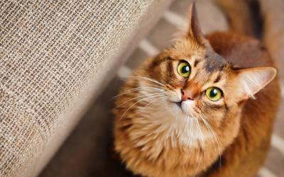 La Litière Naturelle et Écologique du Chat Zéro déchet